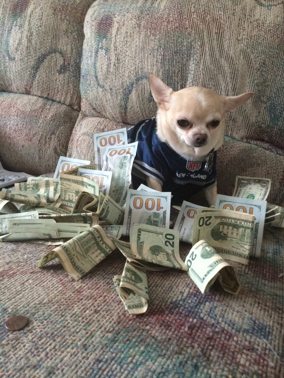 How to save money? Follow the money dog!